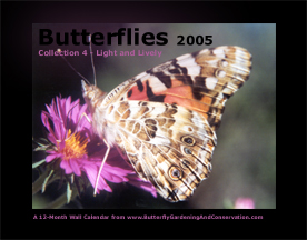 Butterfly Calendar 4 cover