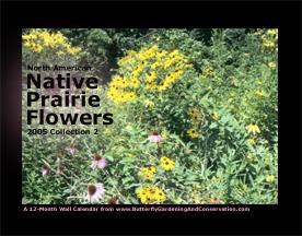 Prairie Flower Calendar 2 cover