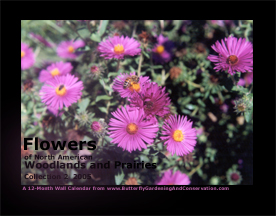 Prairie and Woodland Flowers Calendar 4 cover