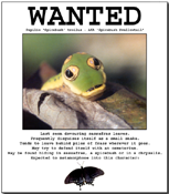 Spicebush Swallowtail caterpillar on 'Wanted' poster.